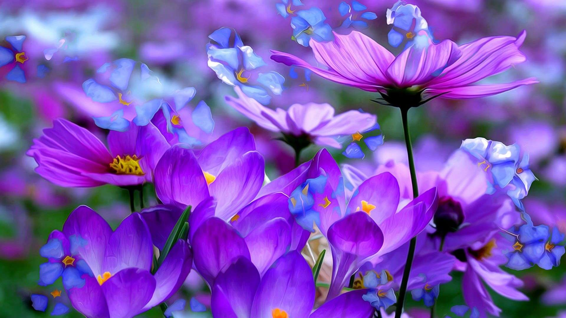 Purple Flowers HD Wallpapers For Desktop Best Collection 1920x1080