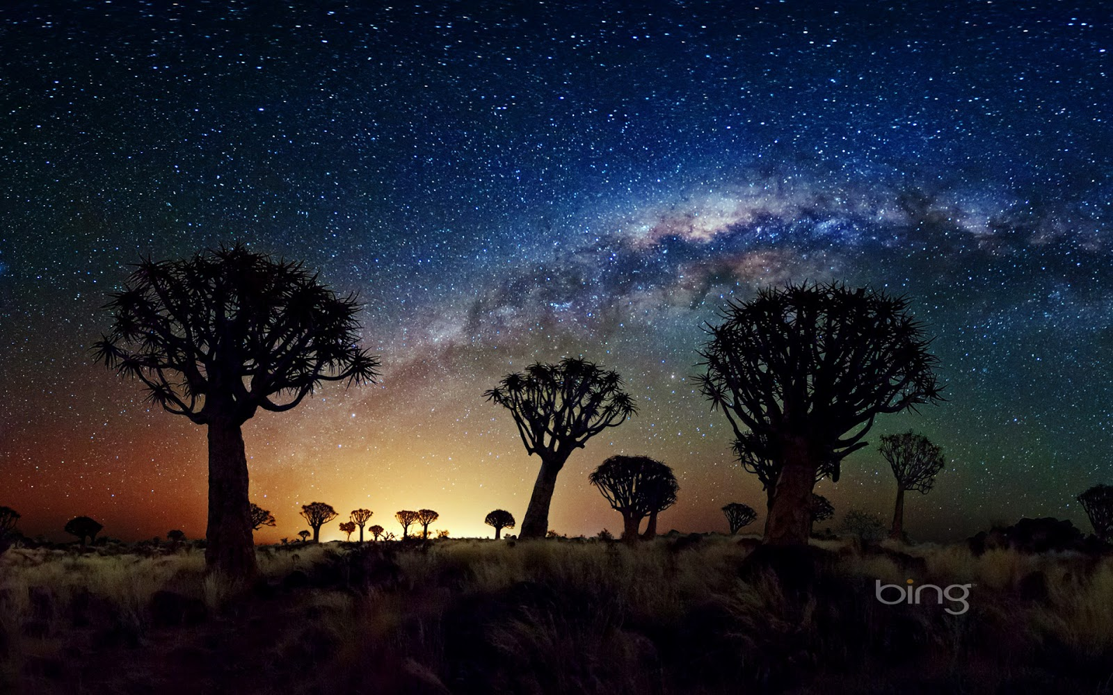 The Milky Way stretches over the Quiver Tree Forest Namibia 1600x1000