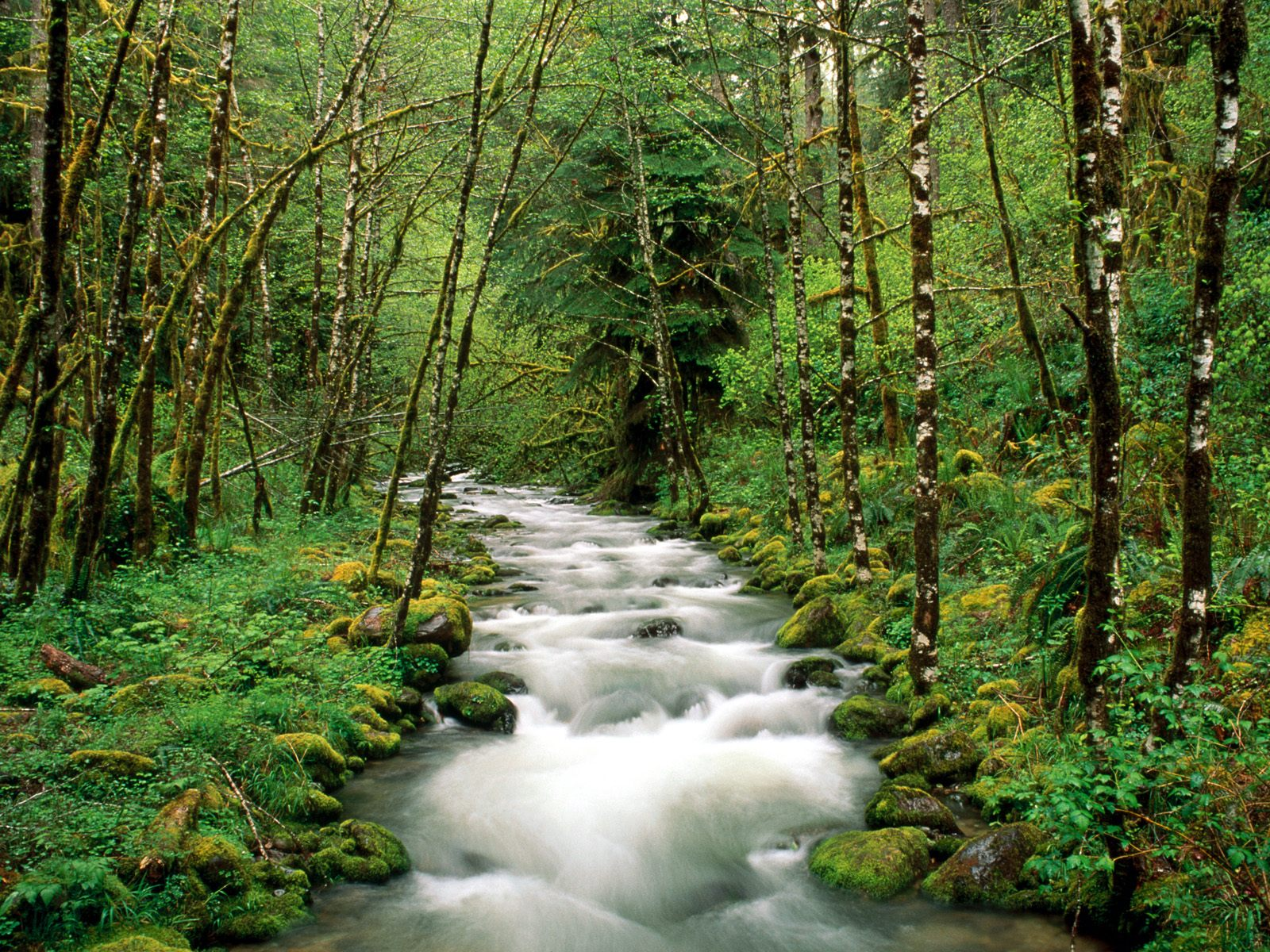 Rivers and Creeks Wallpapers   Download McKenzie River 1600x1200