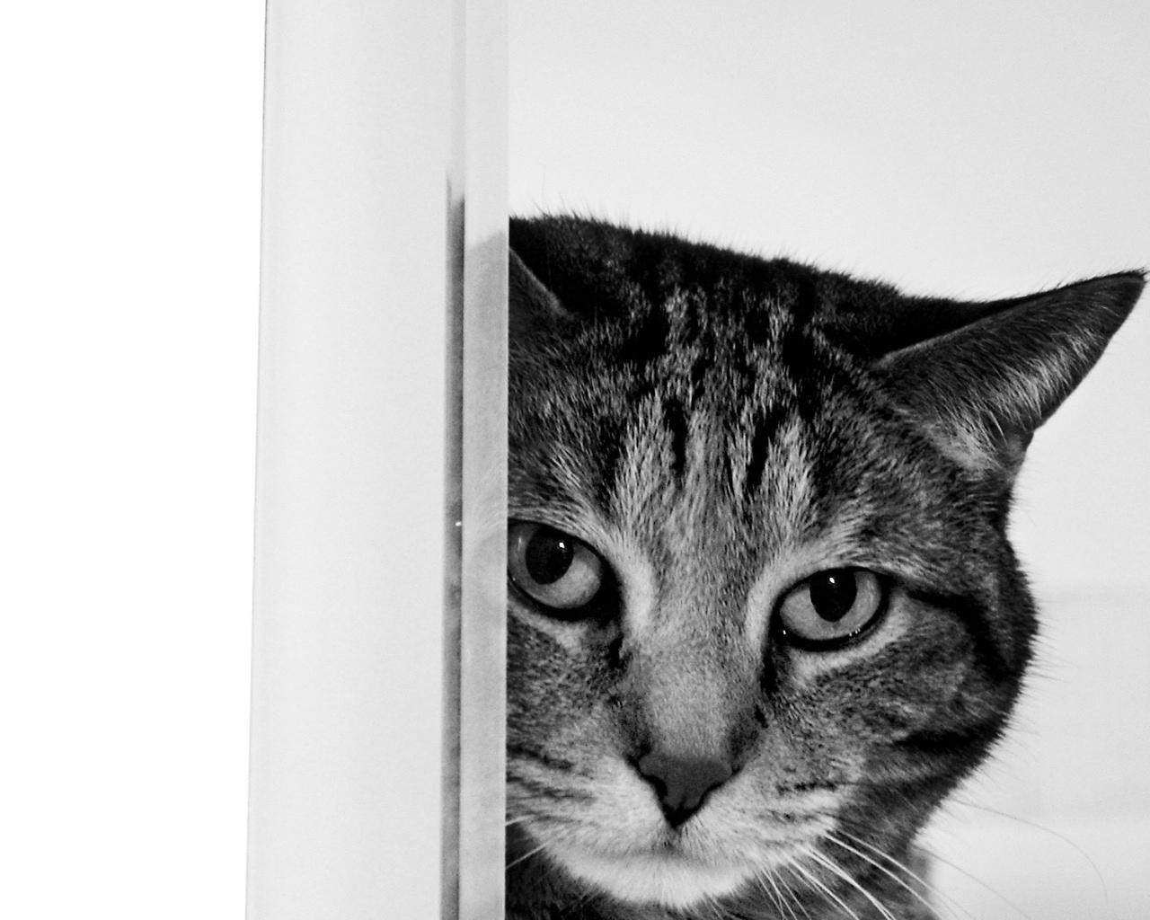 Cat Wallpaper For Home Wallpapersafari