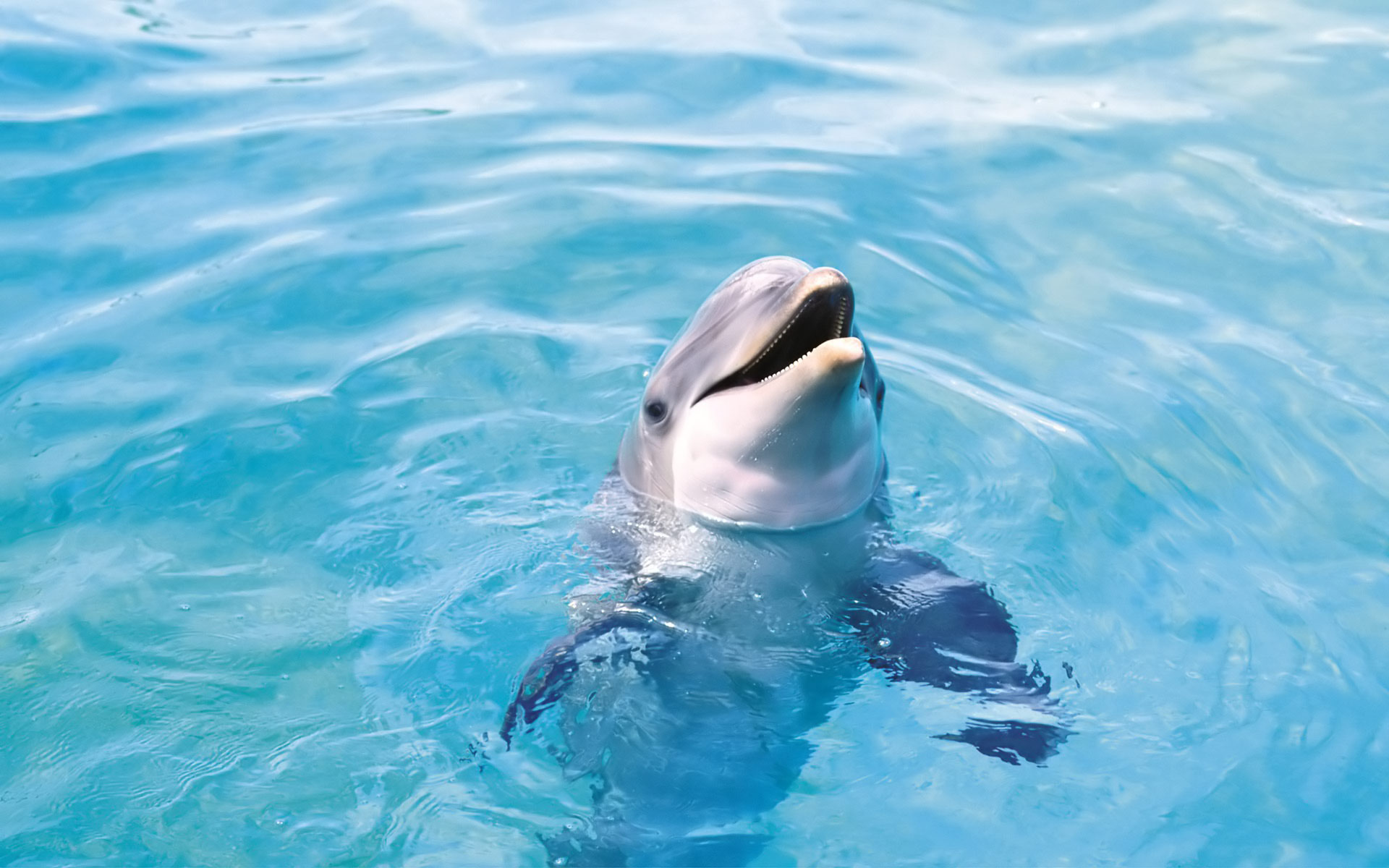 Get Bottlenose dolphin animals Wallpaper and make this wallpaper 1920x1200