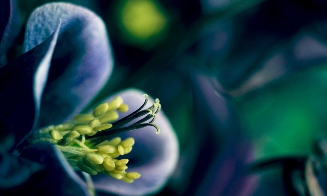HD Wallpapers plant bloemblaadjes bloem bloei lente lente bloemen 1280x768