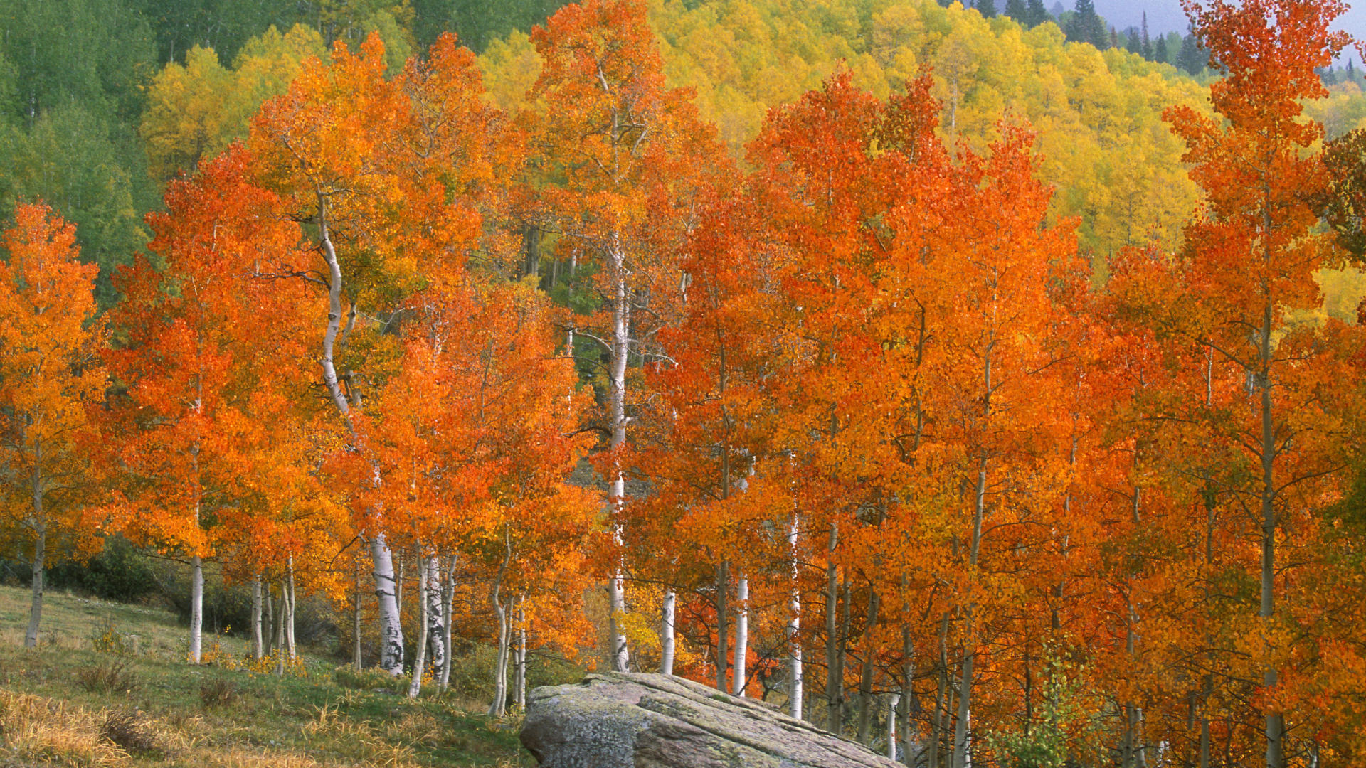 download backgrounds colorado creek background aspens desktop 1920x1080