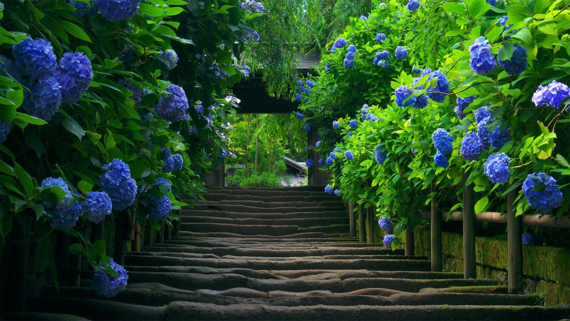 Stairs blue flowers desktop wallpapers and backgrounds Stairs blue 1920x1080