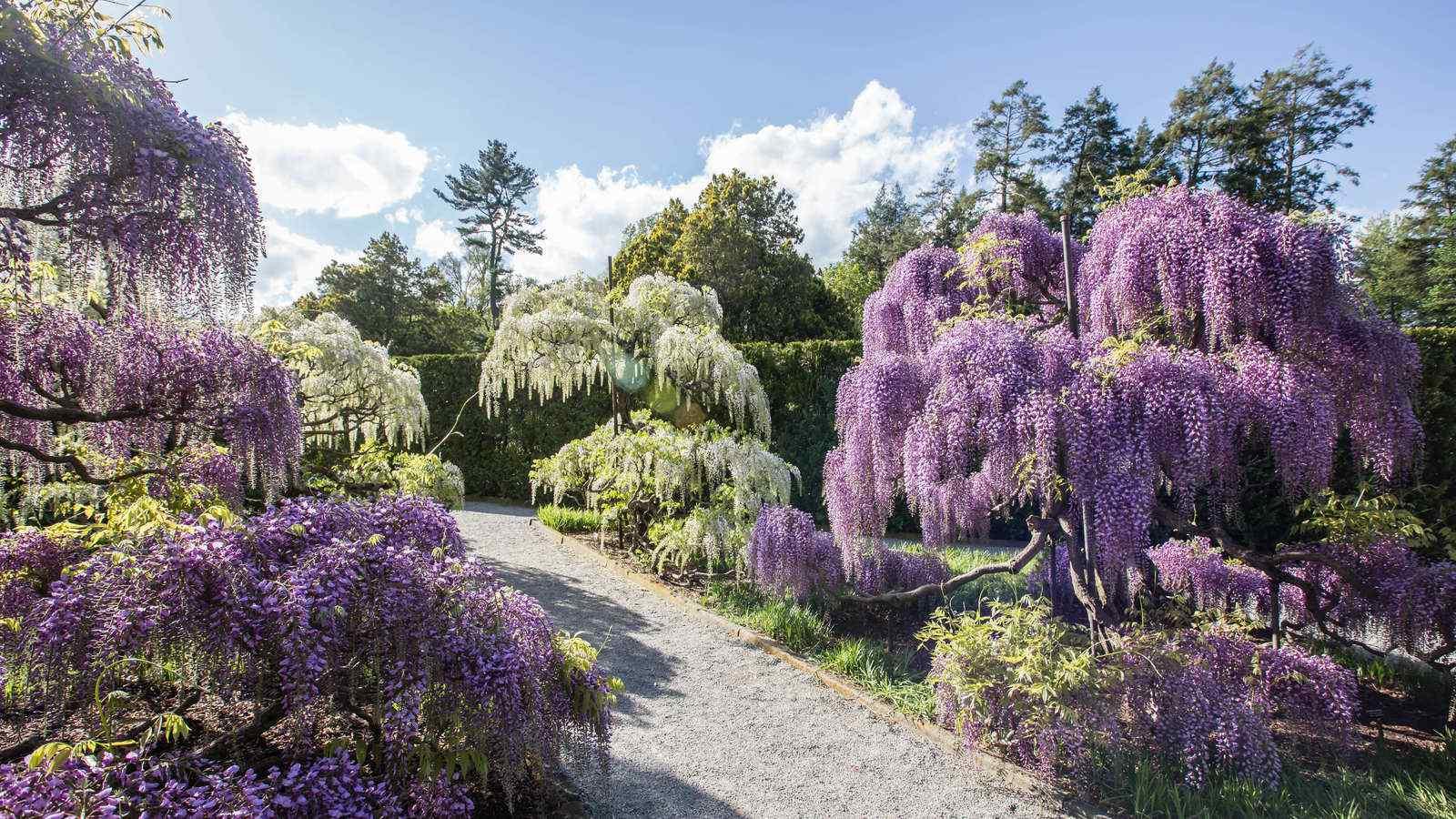 Spring Blooms Season Longwood Gardens 1600x900