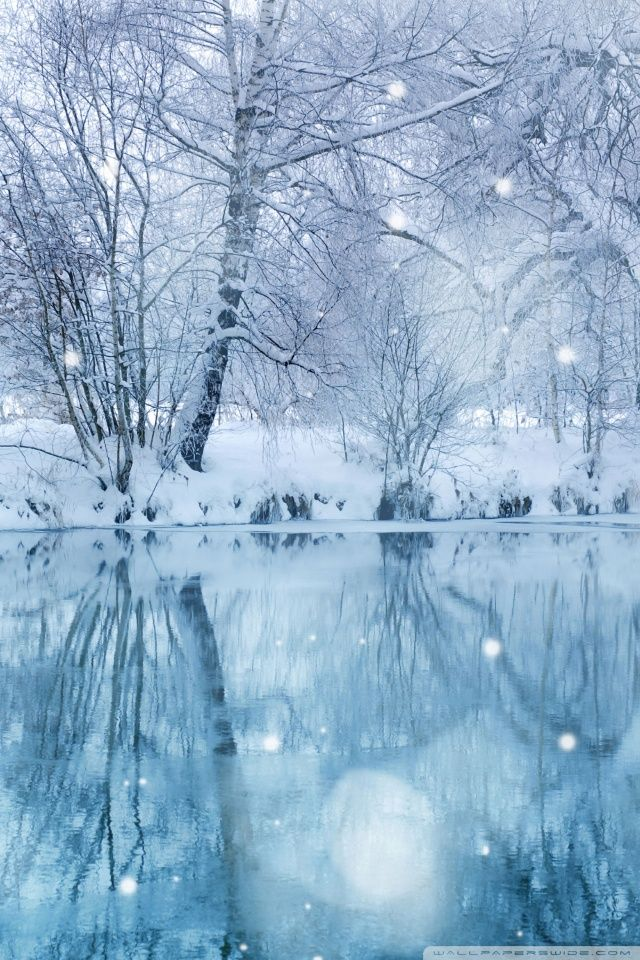 Winter Wallpapers HD Desktop Backgrounds Images and Pictures 640x960