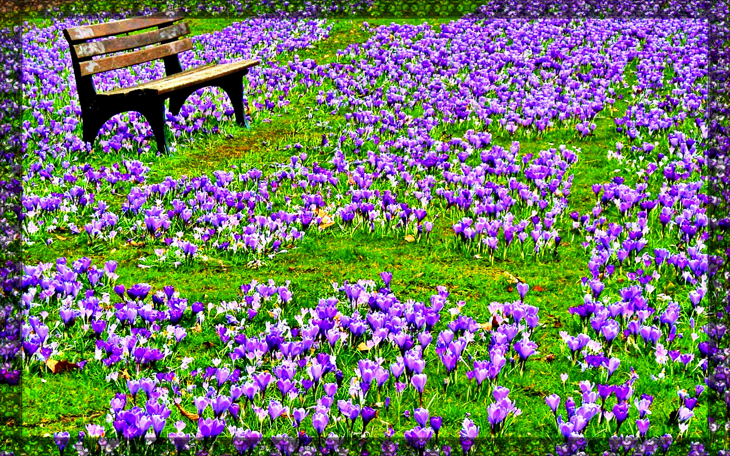 Spring Flowers Wallpapers 2560x1600