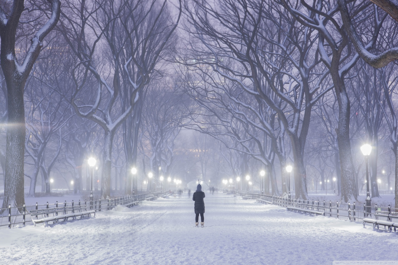 Central Park New York City Winter Background 4K HD Desktop 1440x960
