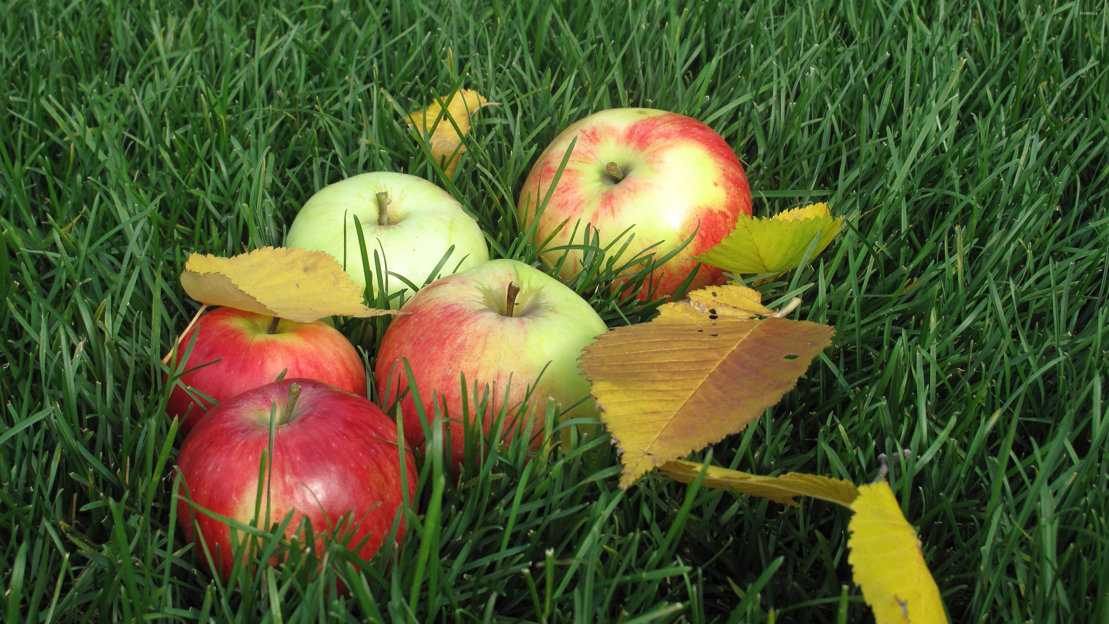 Apples on the grass wallpaper   1351556 3840x2160