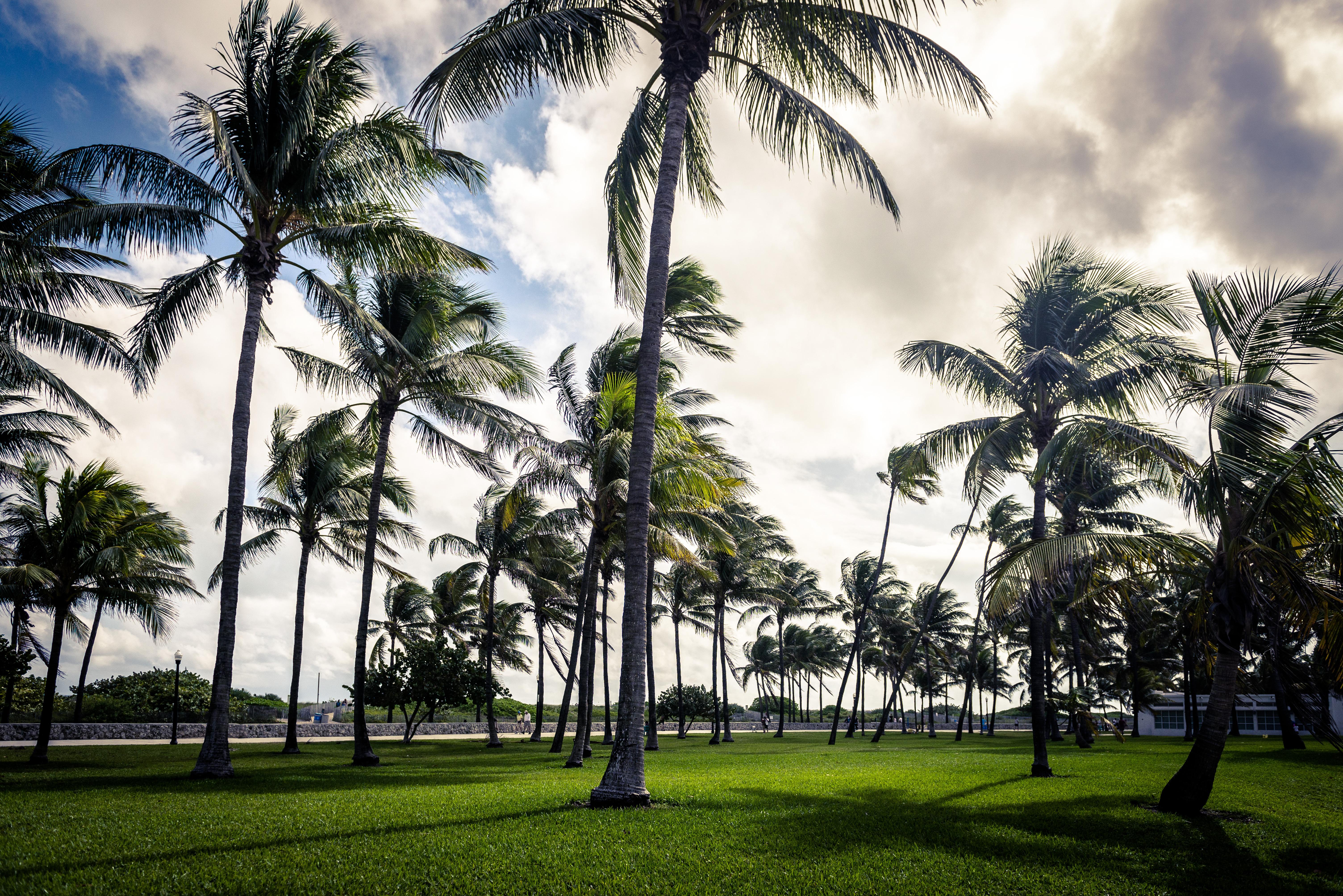 Art deco palm miami beach florida usa sky cloud grass park 6016x4016