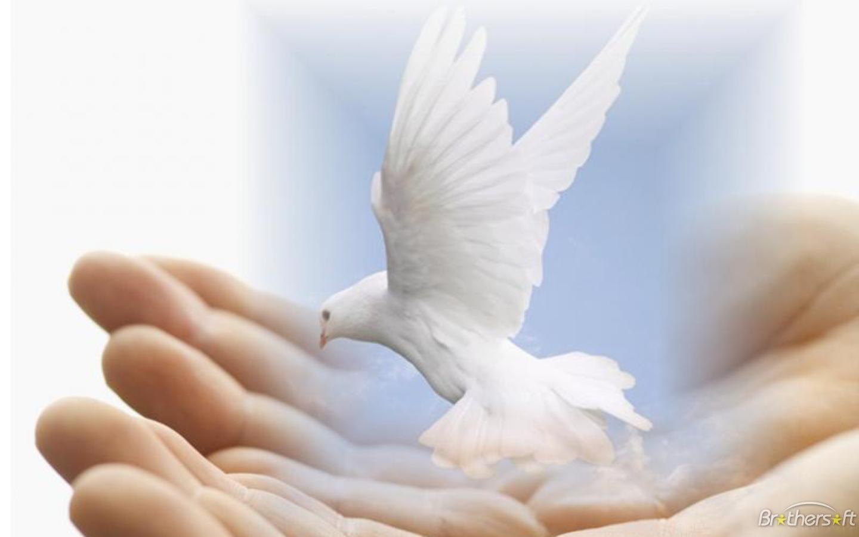 Dove of Peace Wallpaper Dove of Peace Wallpaper Download 1440x900