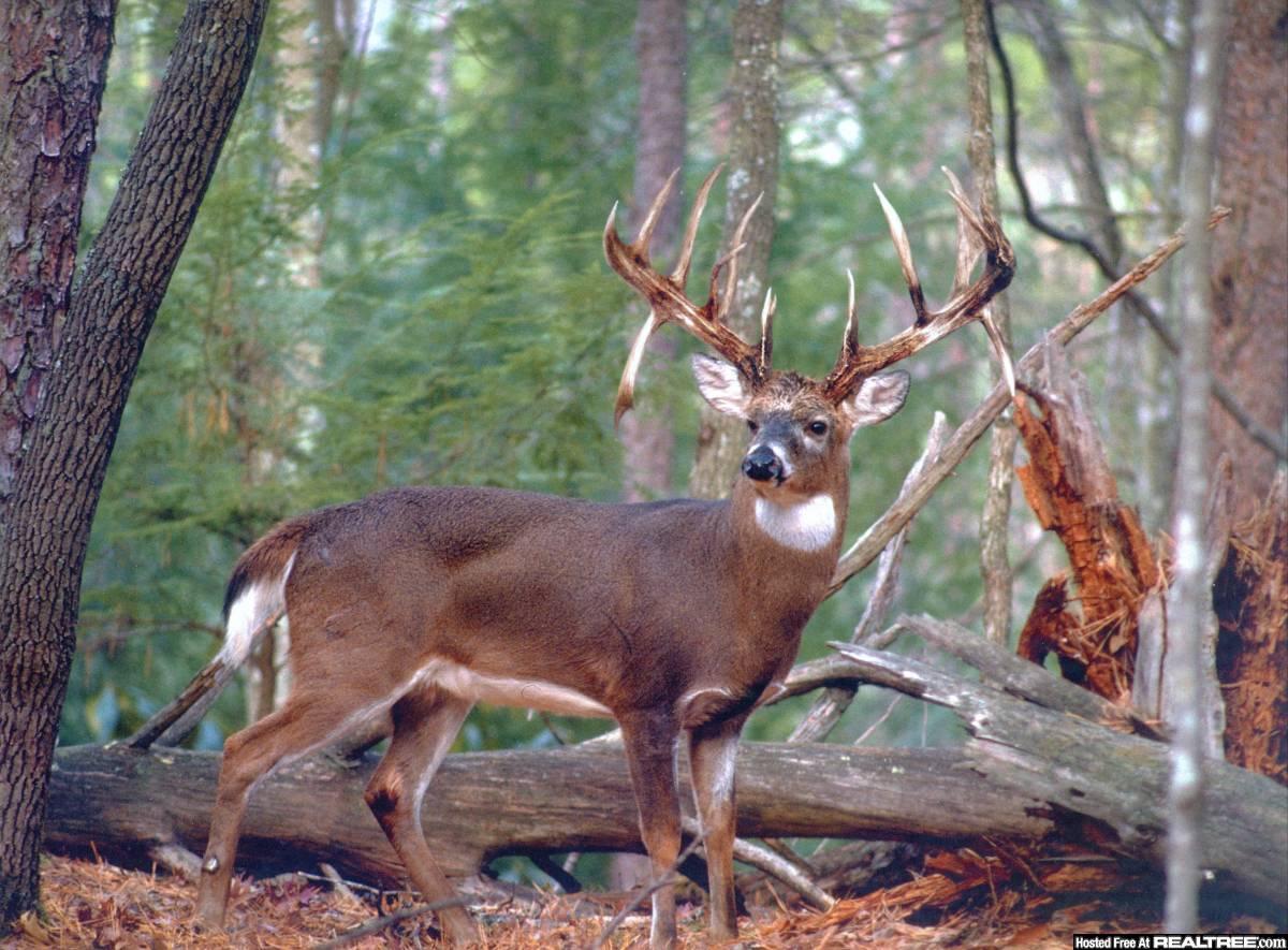 Monster Whitetail Bucks Wallpaper Find that buck fever is 1200x885