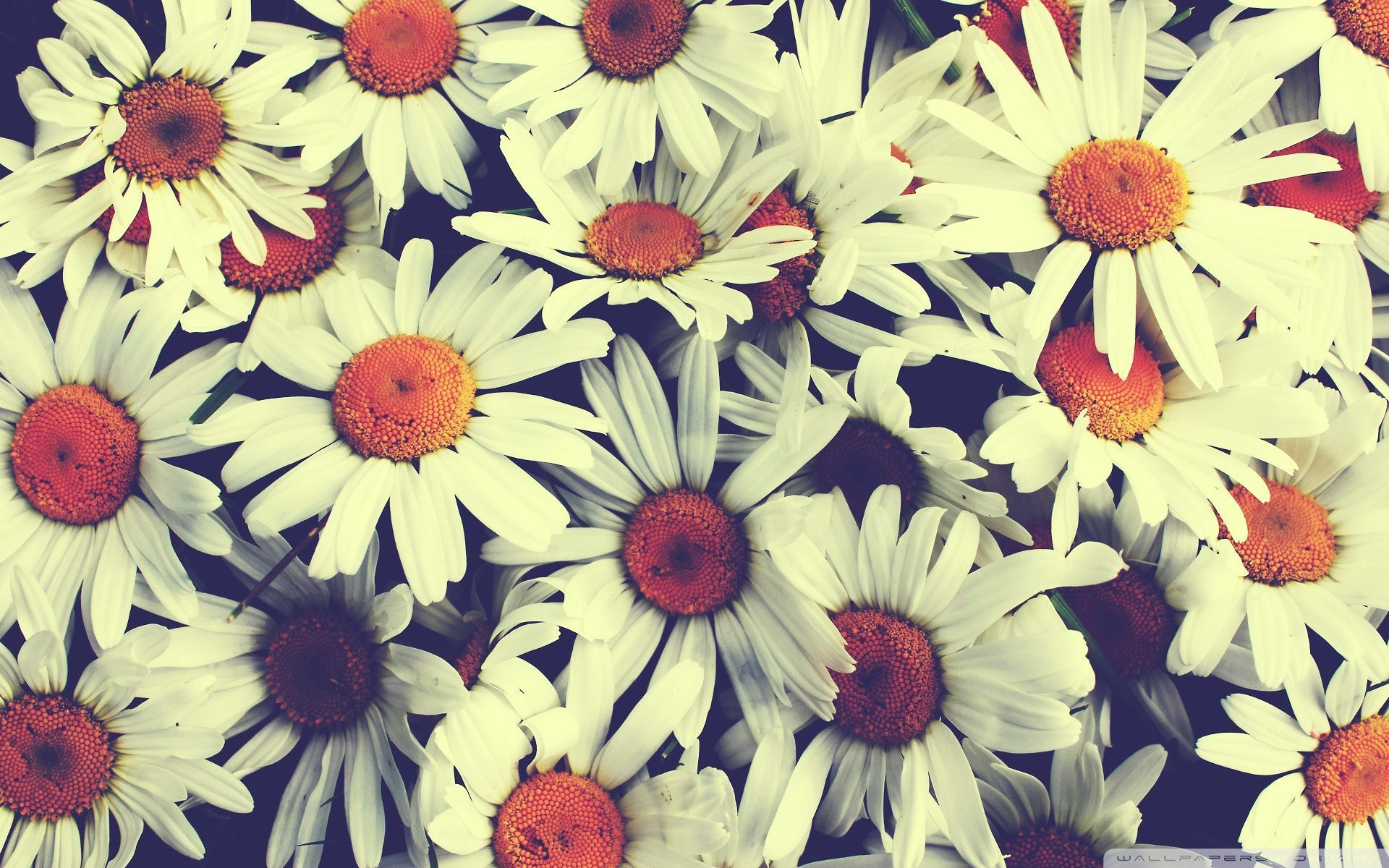 60+] Flower Computer Backgrounds on WallpaperSafari