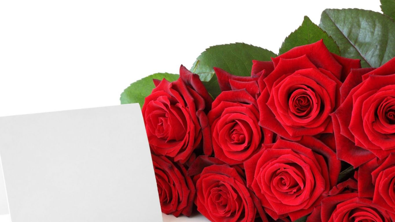 1366x768px Red Rose Wallpaper Free Download Wallpapersafari