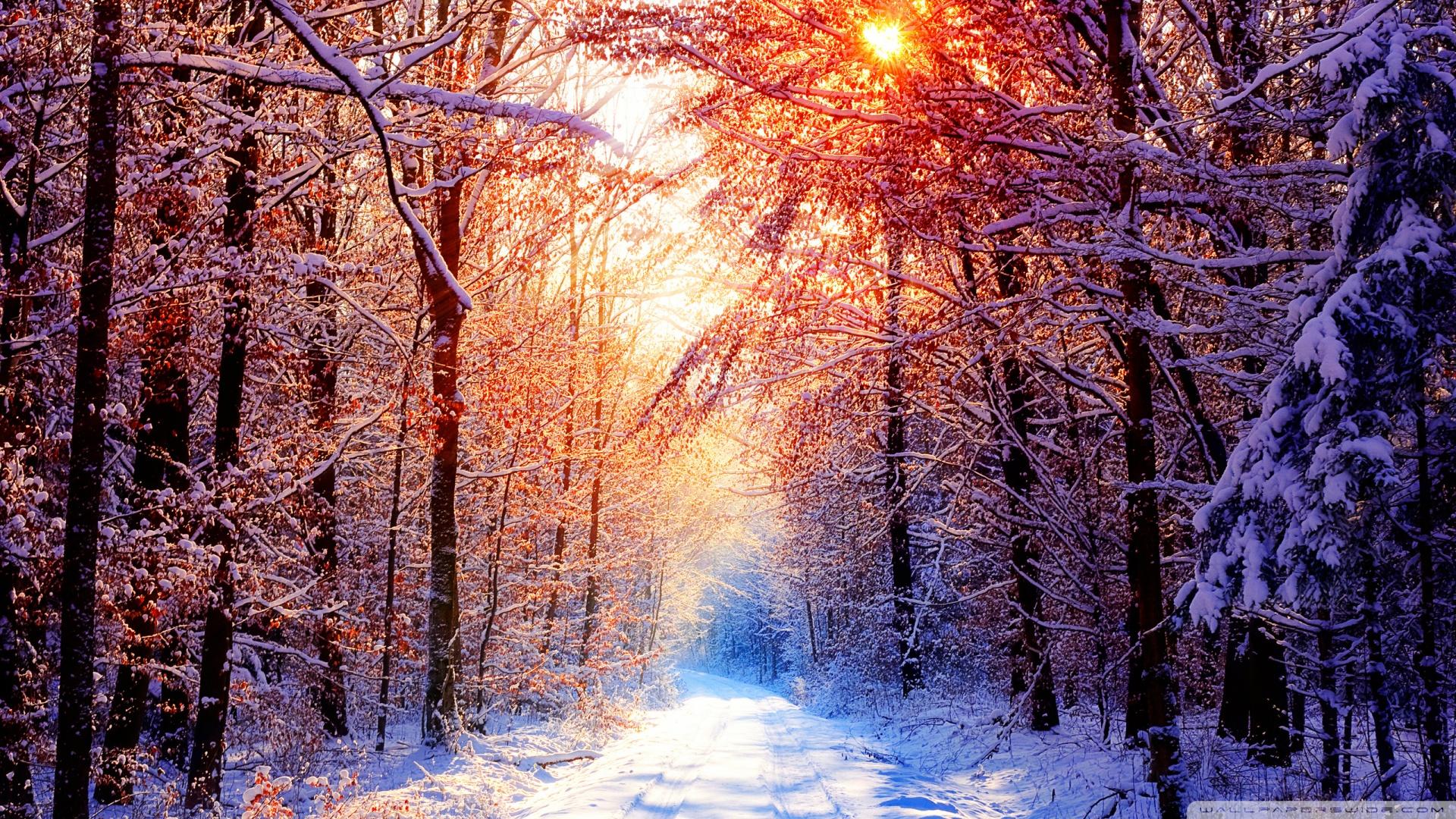 Winter Scenes HD desktop wallpaper Widescreen High Definition 1920x1080