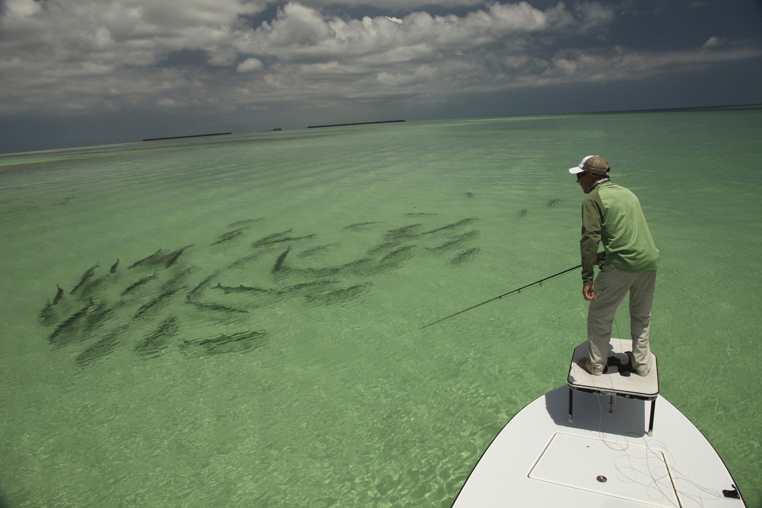 Saltwater fishing wallpaper wallpapersafari for Salt water fly fishing