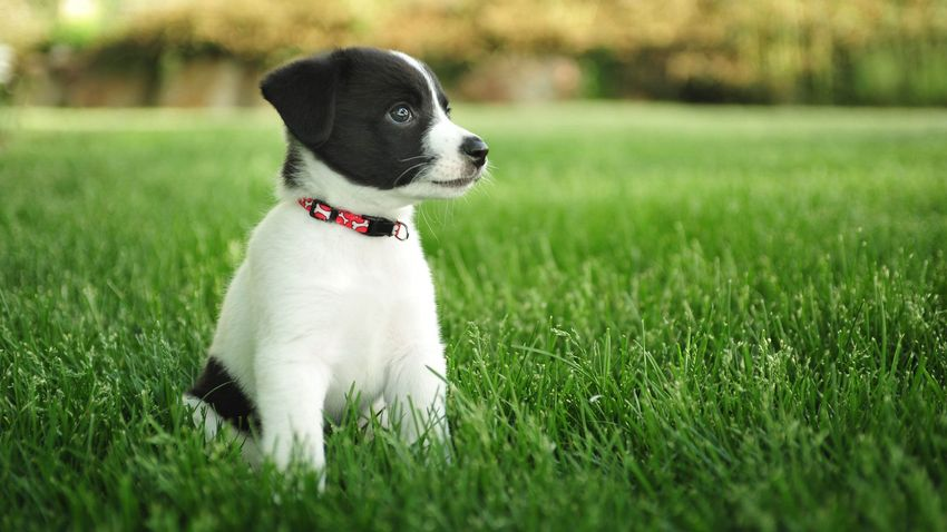 Spring Desktop Backgrounds With Puppies Puppies 850x478