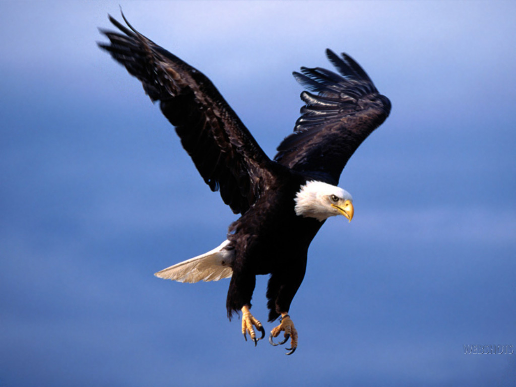 flying eagle wallpaper 1024x768
