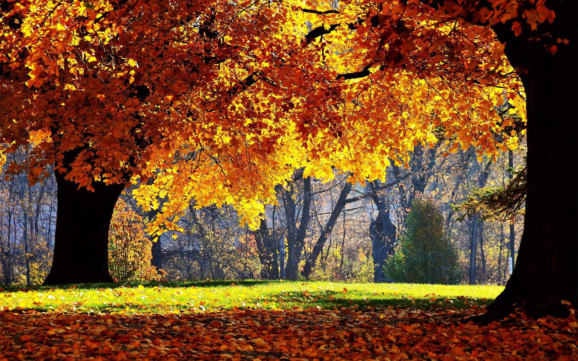 free fall computer wallpaper desktop wallpaper   www fall 1920x1200