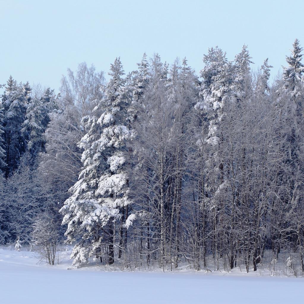 Download Winter Forest Scene iPad iPad 2 and iPad Mini Wallpaper 1024x1024