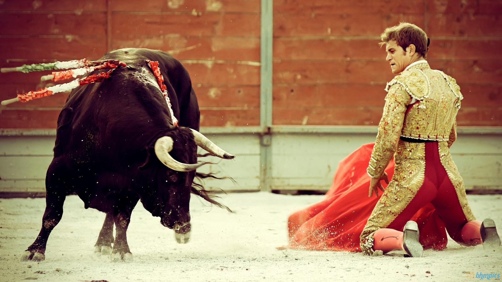 bull fighting 1920x1080 hd - photo #7