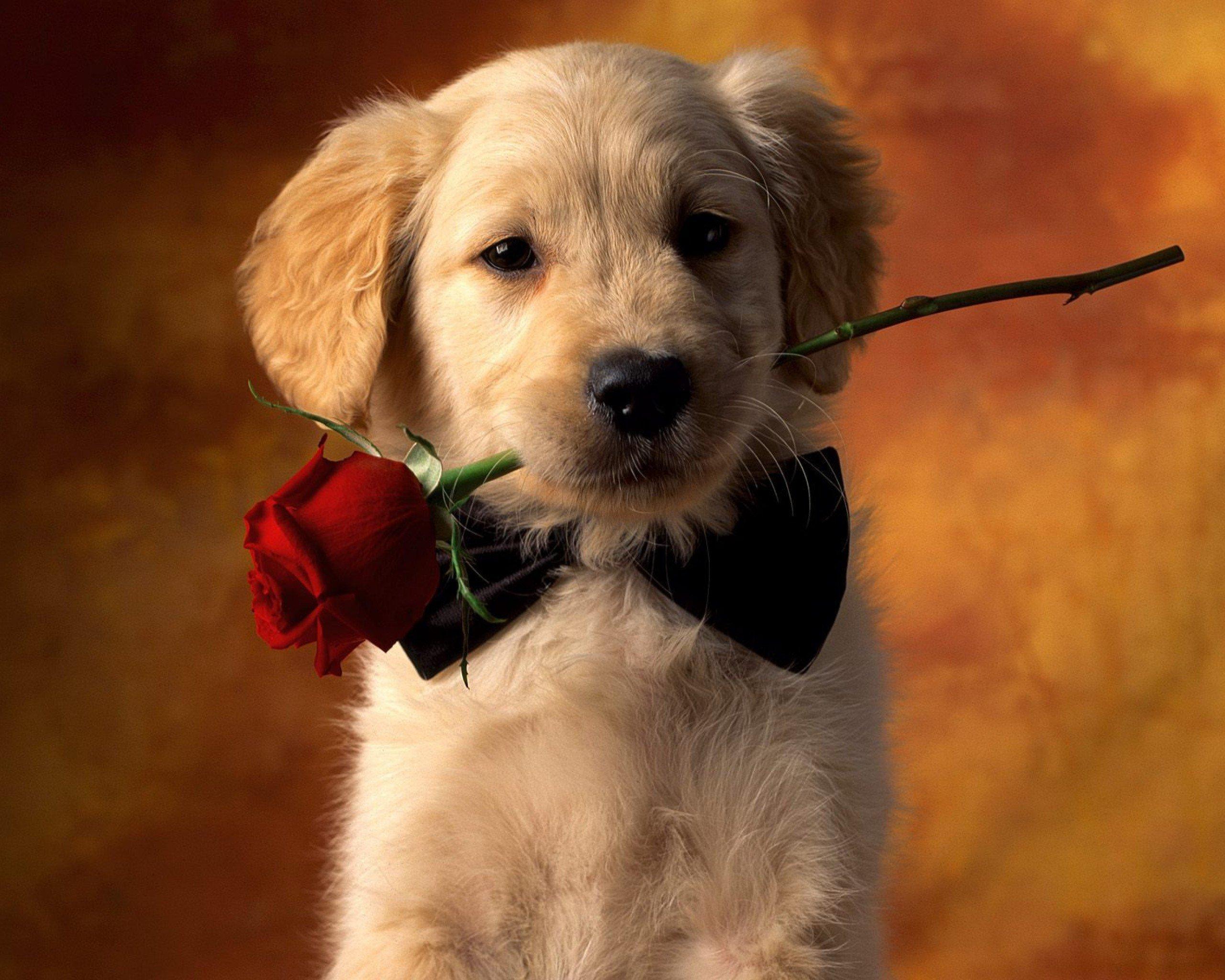 50 Cute Dogs Wallpapers Dog Puppy Desktop Wallpapers 2560x2048