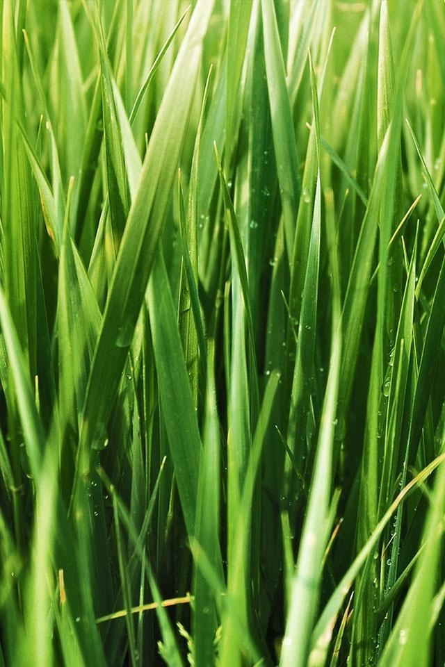 Gallery Of Green Grass Wallpaper Wallpapersafari 14668
