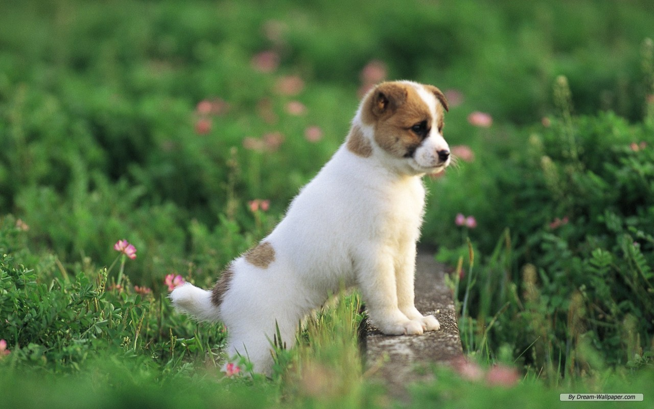 Wallpaper Animal wallpaper Lovely Dog Baby 5 1280x800