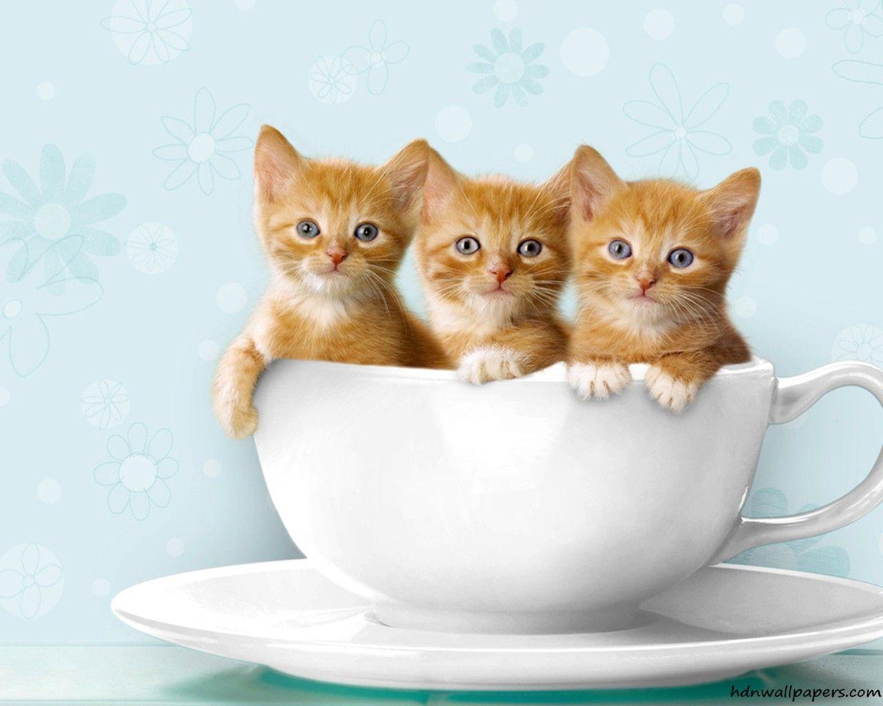 Kitten Wallpapers 1280x1024