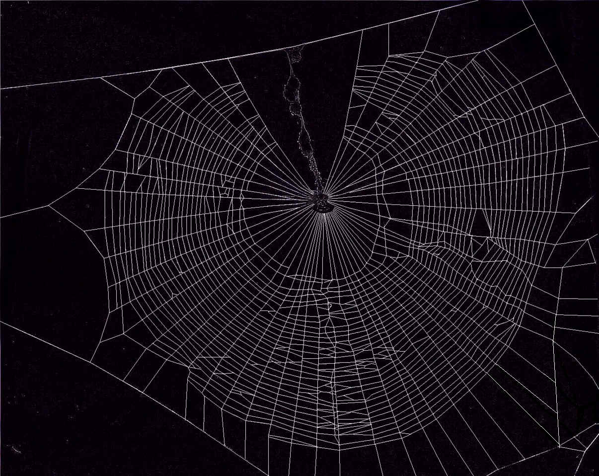 Spider Web Wallpaper images 1206x958