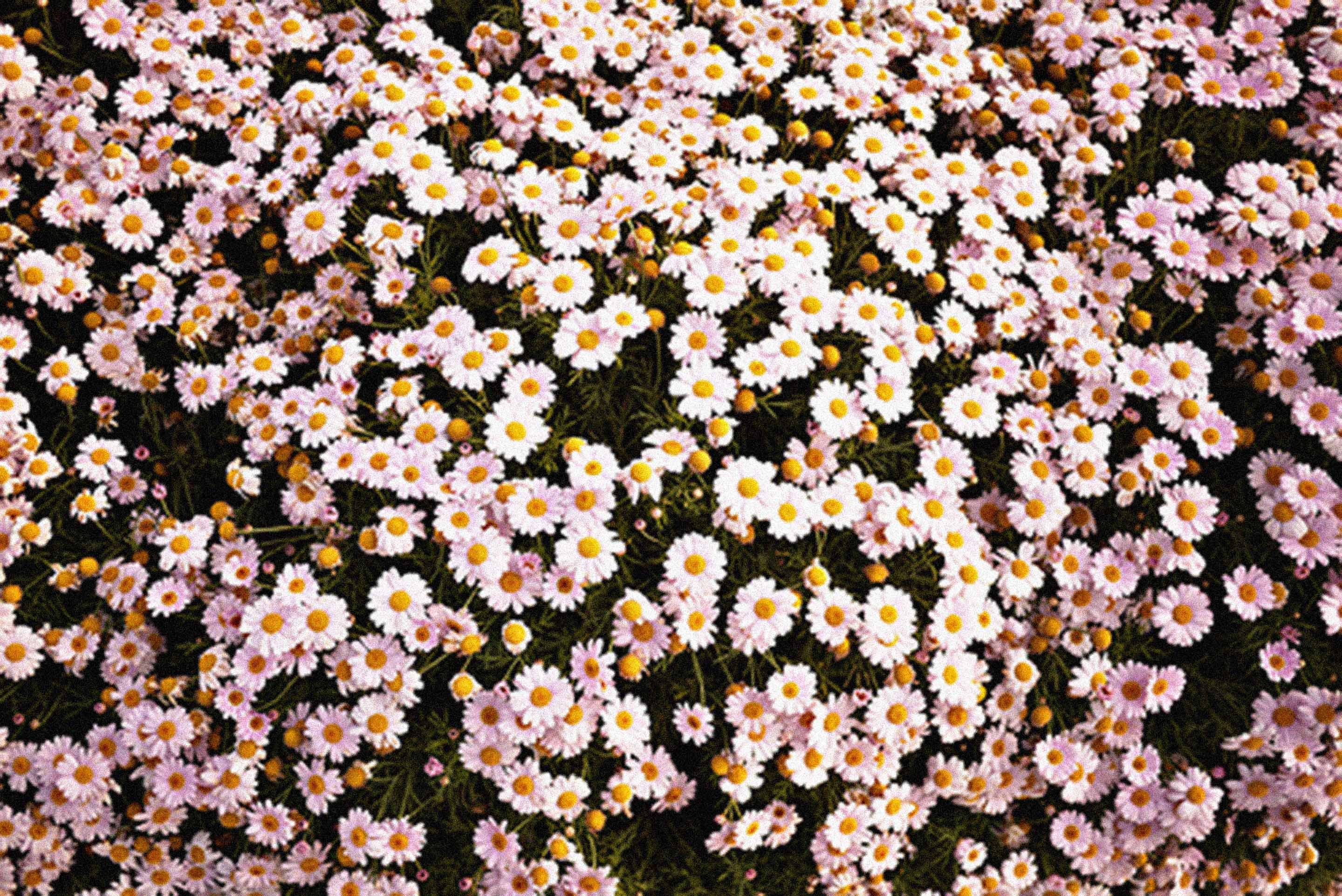 Daisy Background Tumblr Images Pictures   Becuo 2880x1924