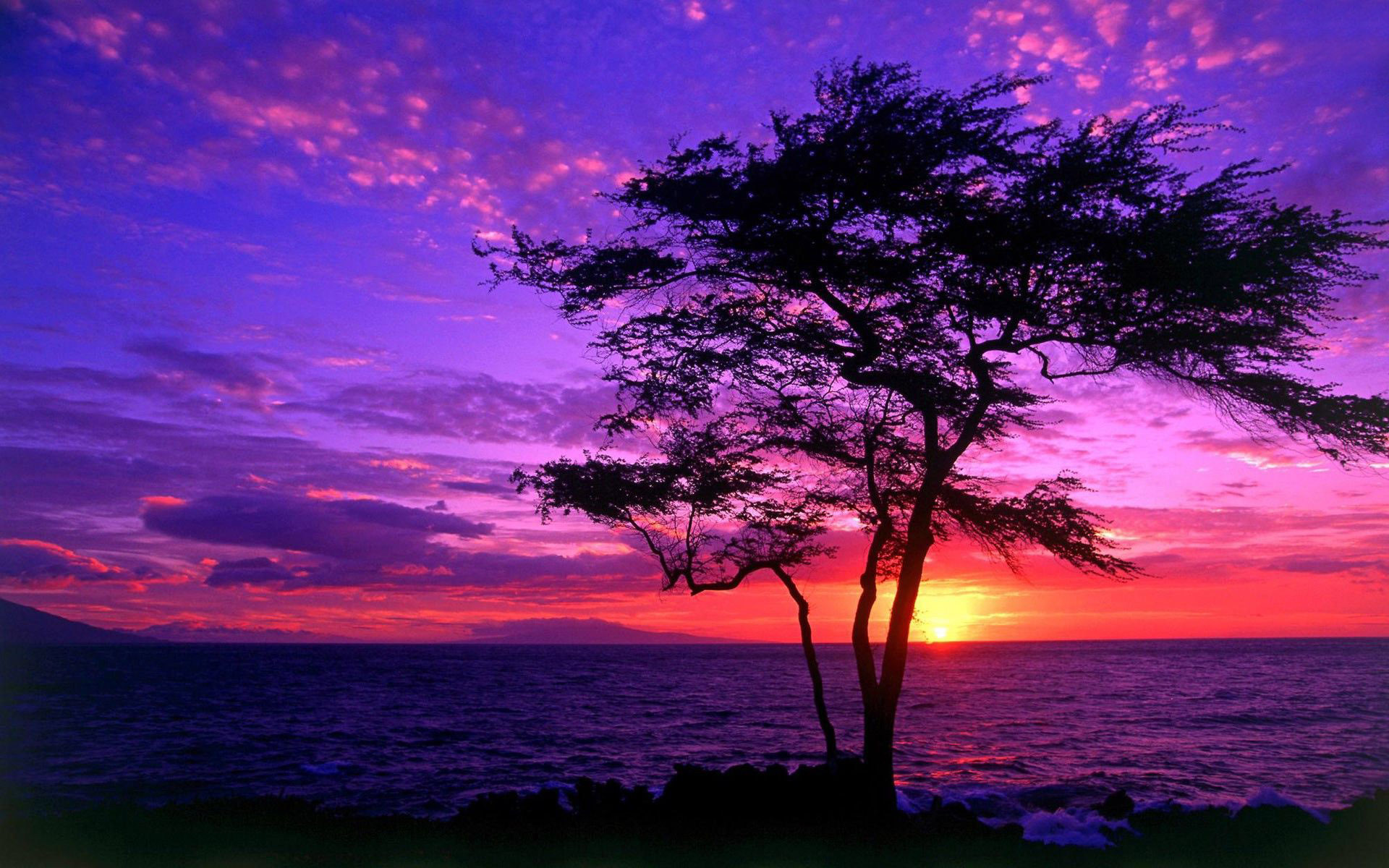 Download Tree silhouette in the purple sunset wallpaper