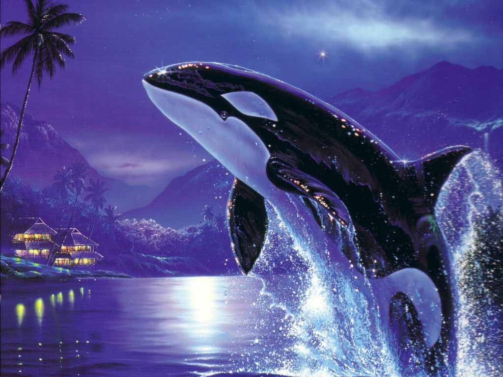 HQ Wallpapers Orca Wallpapers 1024x768