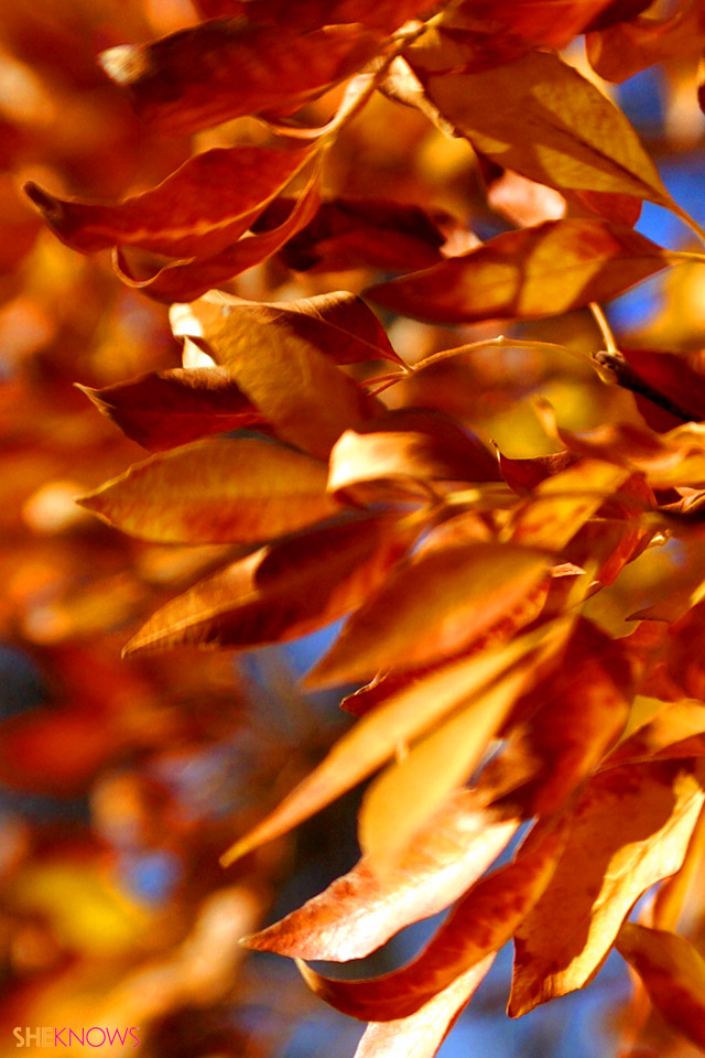 fall wallpaper iphone fall leaves wallpaper iphone wallpapersafari 10575