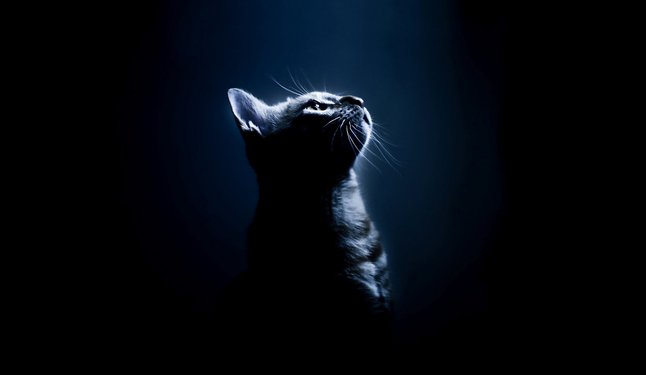 warrior cat wallpapers backgrounds - wallpapersafari