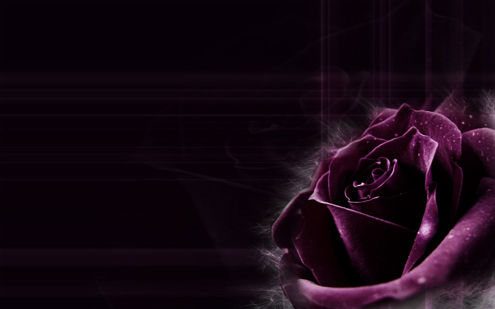 Dark Purple Rose Backgrounds Images Pictures   Becuo 1920x1200