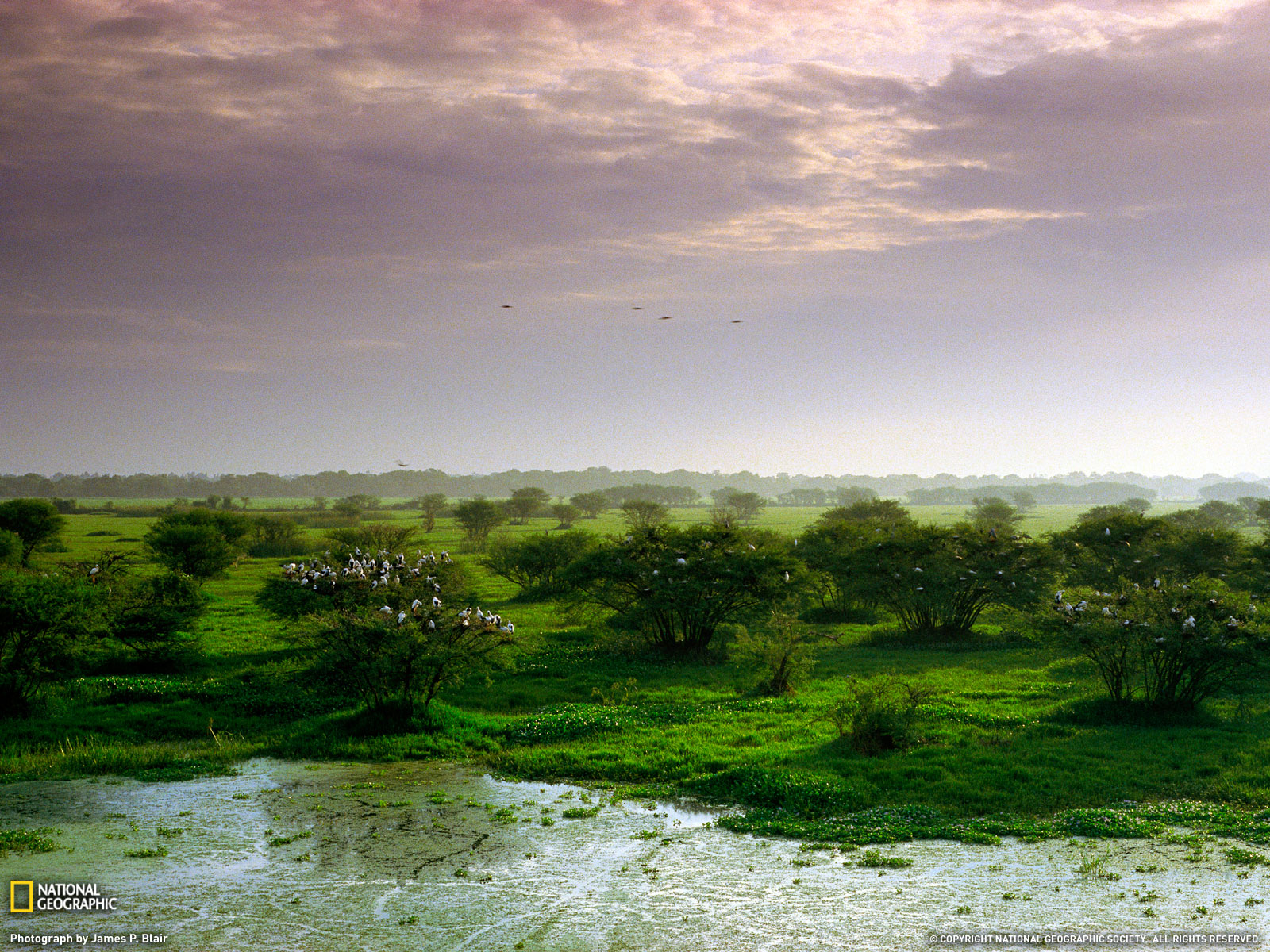 Keoladeo National Park Photo India Wallpaper   National Geographic 1600x1200
