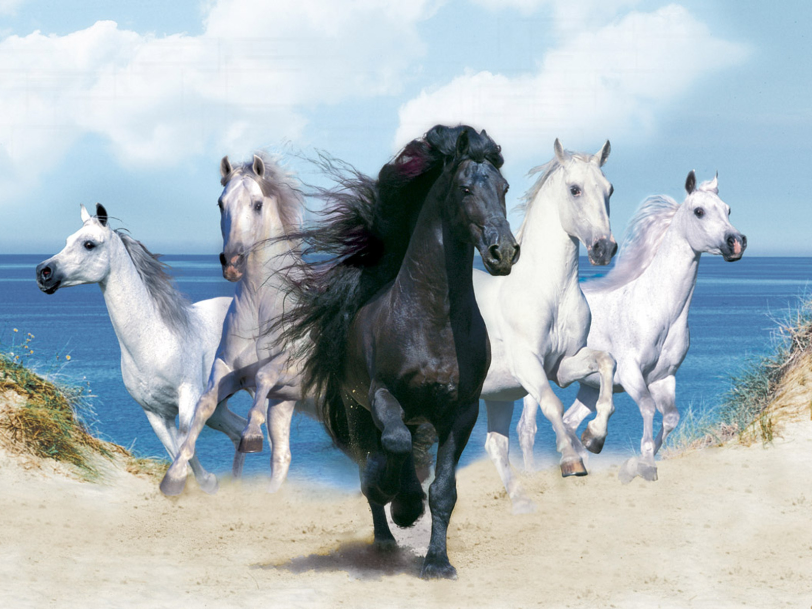 Horse Wallpapers Pictures of Horse Animal Photo 1600x1200