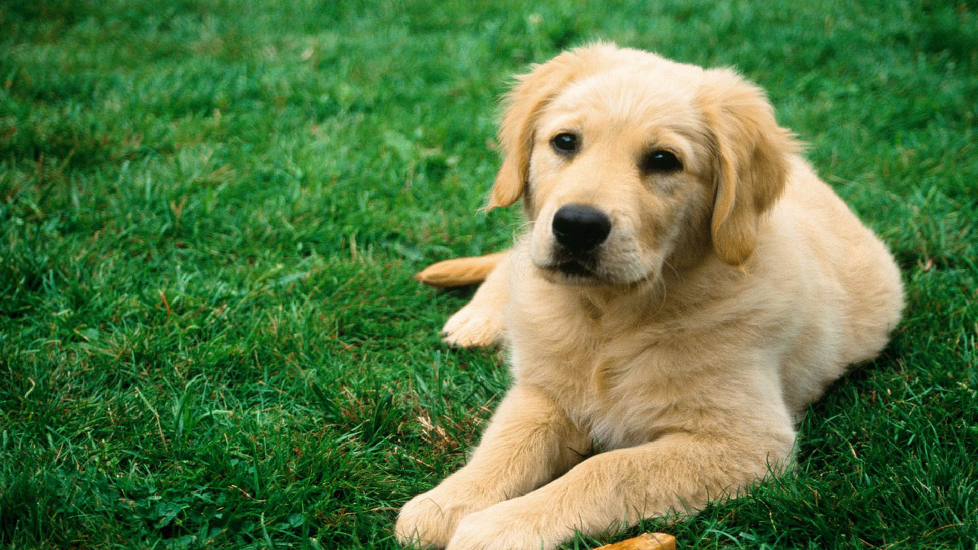 dog 1920x1080 dog 1920x1080 wallpaper dog 1920x1080 picture dog 1920x1080