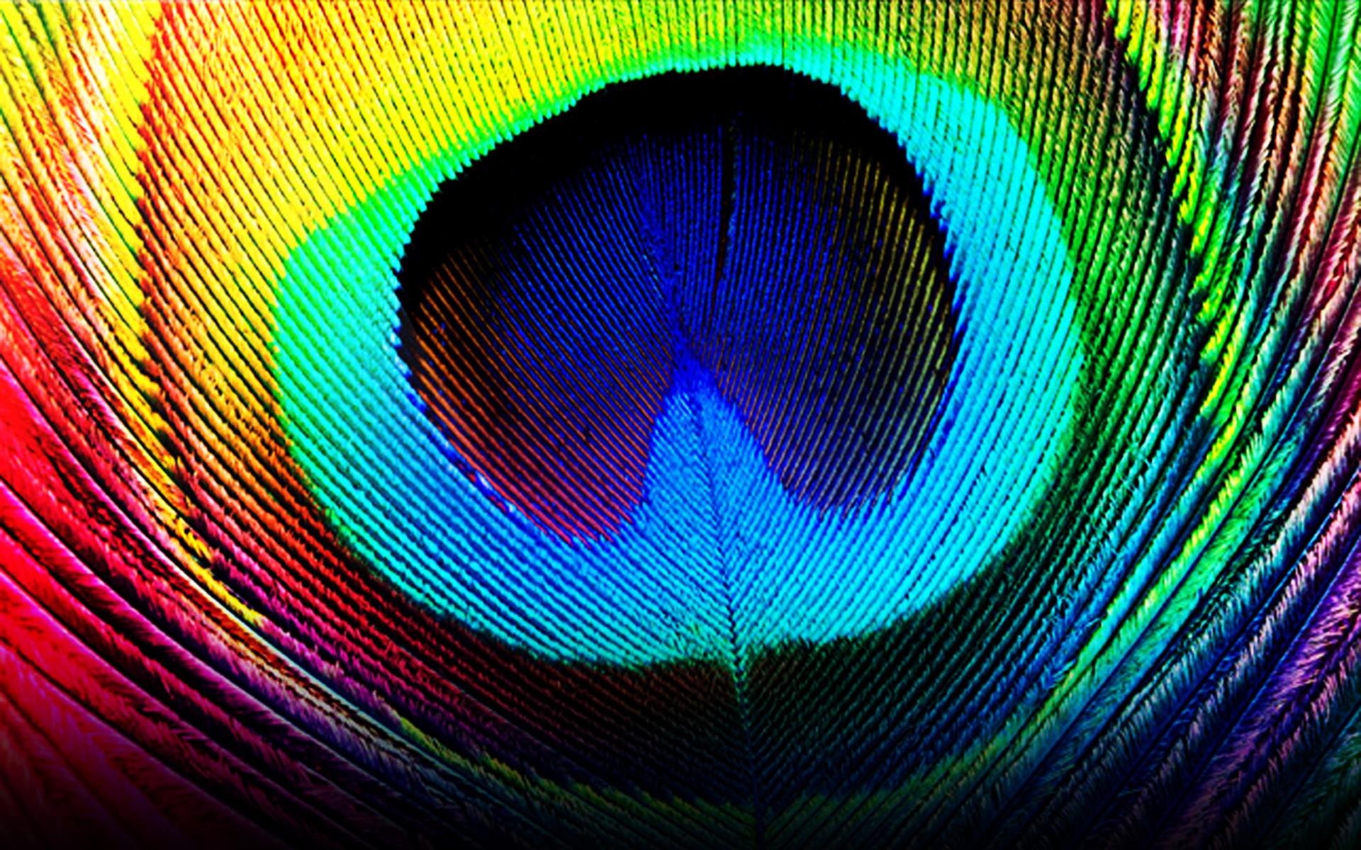 rainbow feathers wallpaper 1920x1200