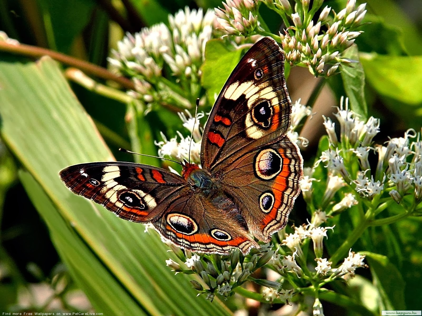 live butterfly wallpaper and make this live butterfly wallpaper 1600x1200