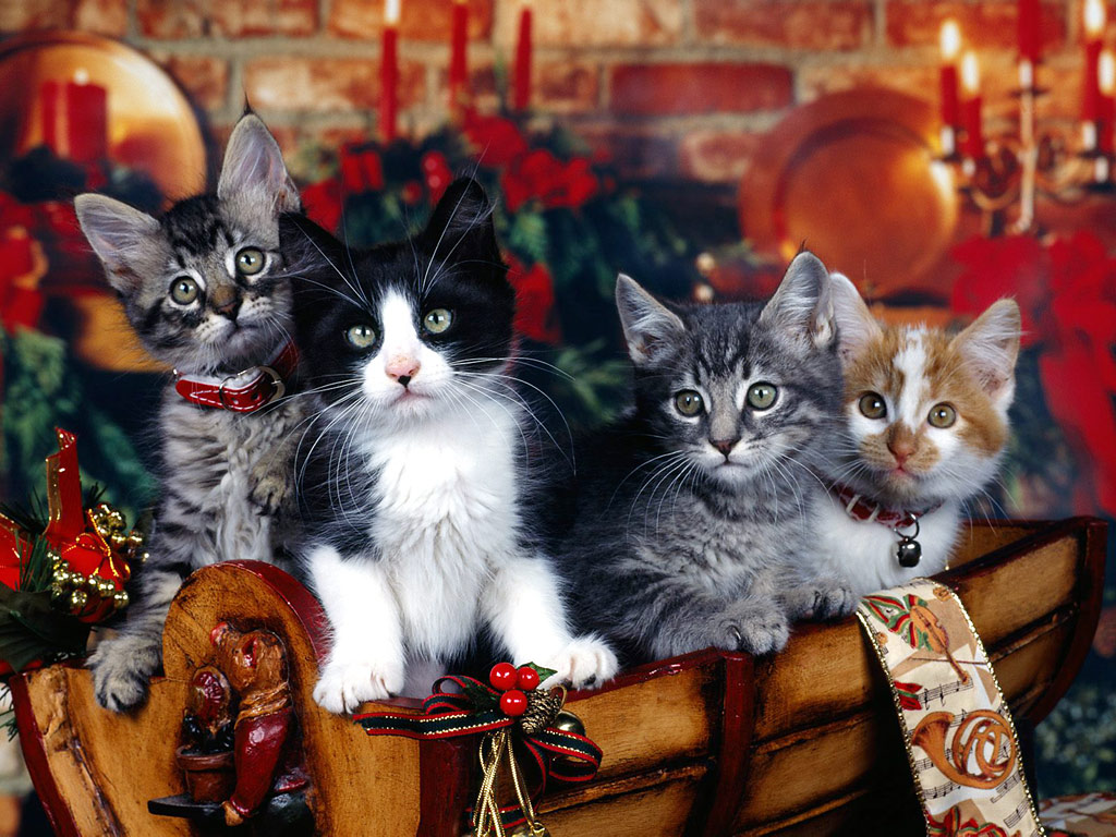 Christmas Kitten Wallpapers Wallpapers High Definition Wallpapers 1024x768