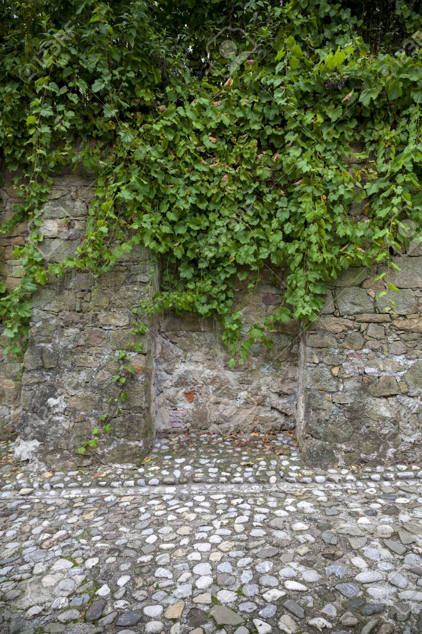Old Stone Wall With Vines Background Stock Photo Picture And 866x1300