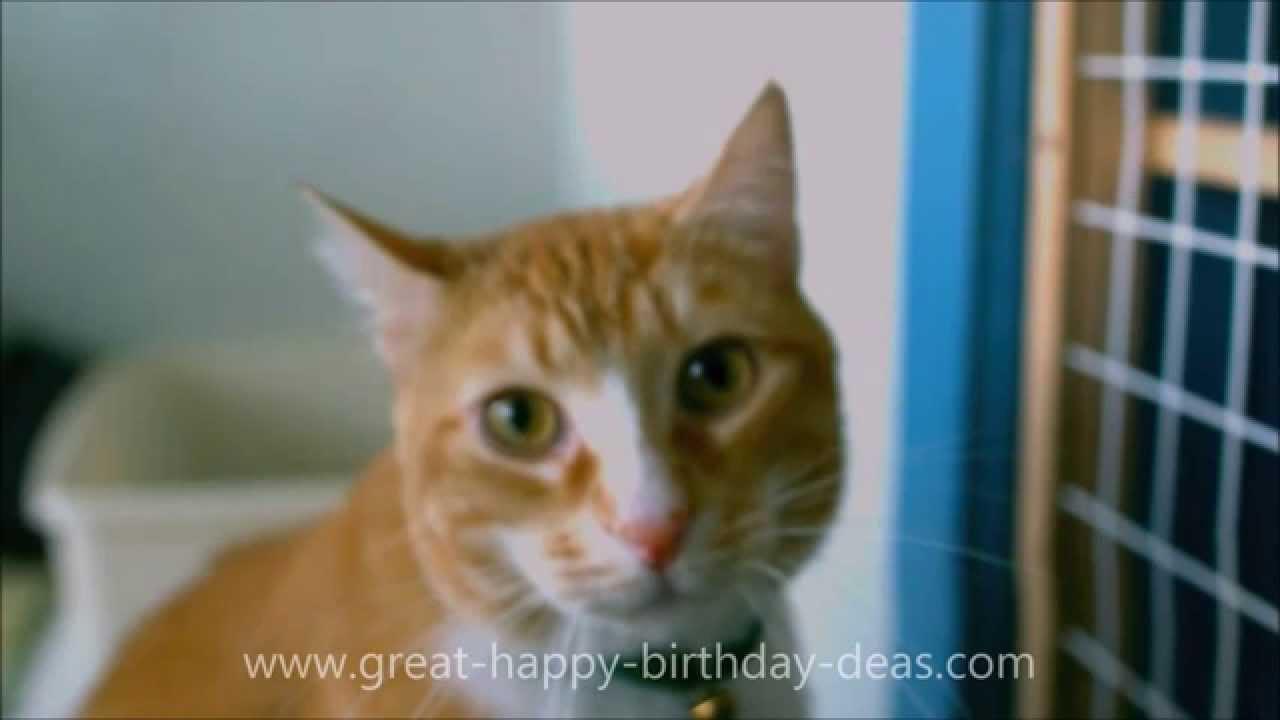 Funny Birthday Cat 4 Widescreen Wallpaper   Funnypictureorg 1280x720