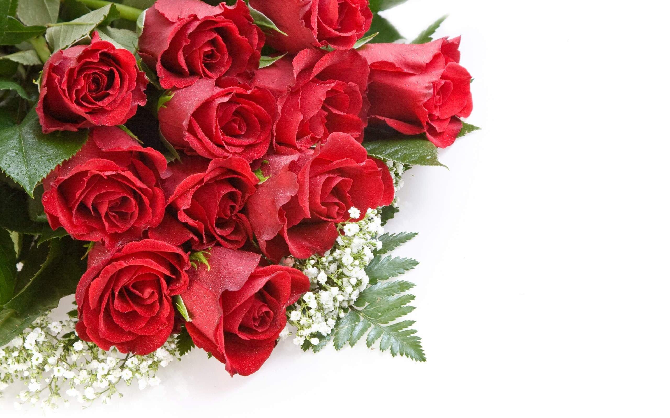 beautiful rose wallpapers hd - wallpapersafari