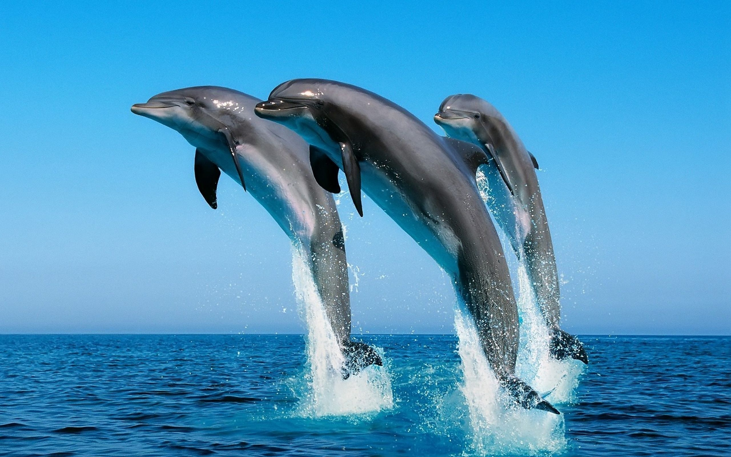 Dolphin Backgrounds 2560x1600