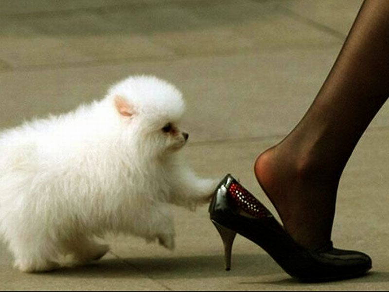 Funny Dog Wallpapers 800x600
