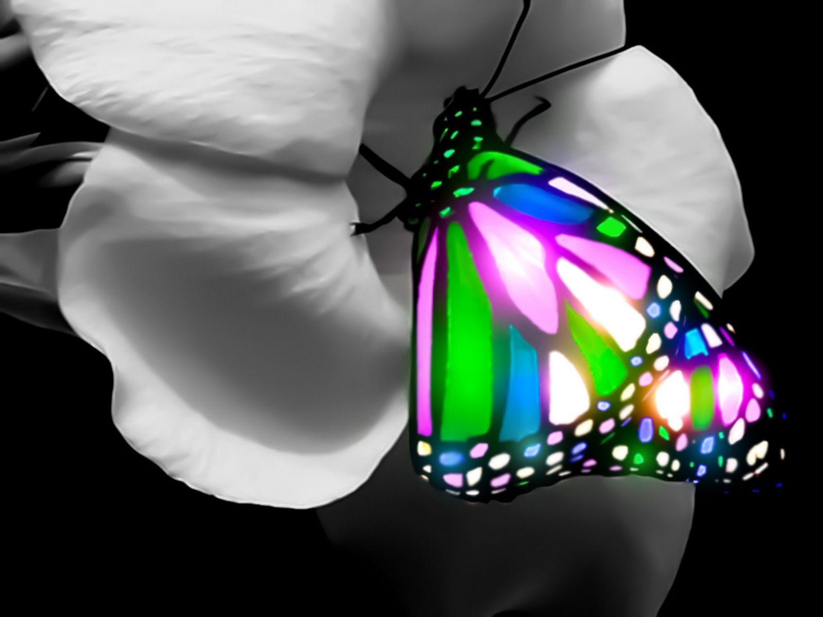 Butterfly Wallpaper 3d 16002151200 121281 HD Wallpaper Res 1600x1200