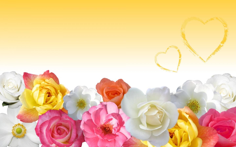 Love Wallpaper In Yellow Yellow Flowers Wallpaper Analysis Short 1440x900
