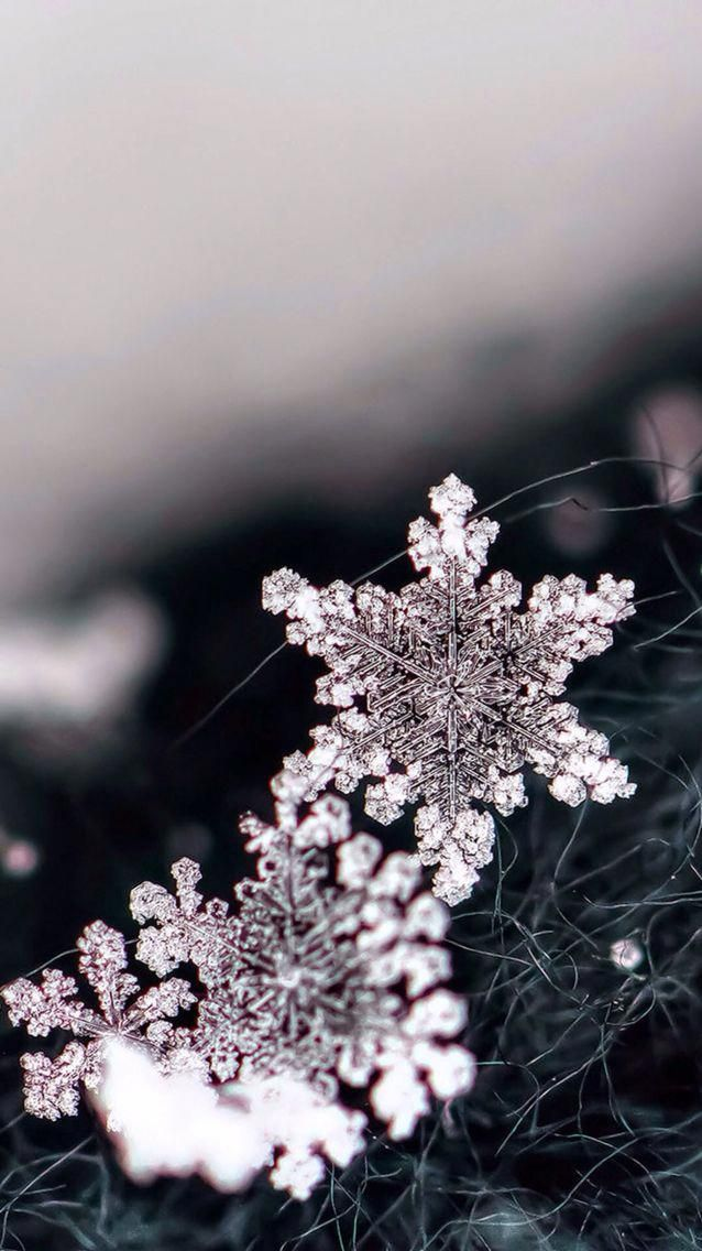Black and white macro image of snowflakes iOS8 HD wallpaper for 638x1136